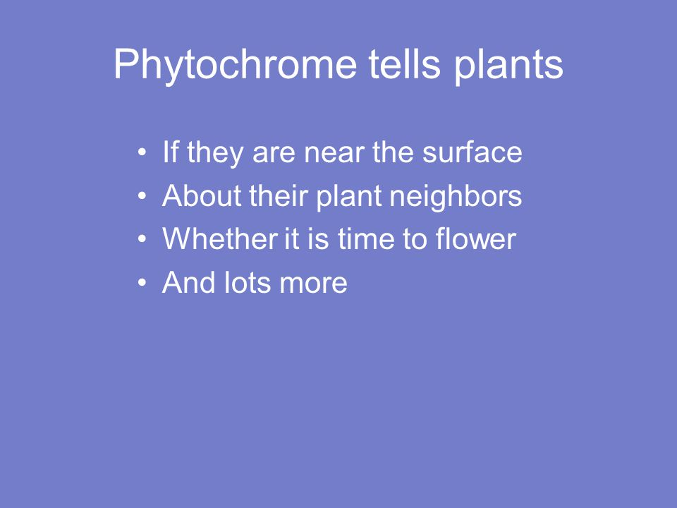 Phytochrome tells plants If they are near the surface About their plant neighbors Whether it is time to flower And lots more