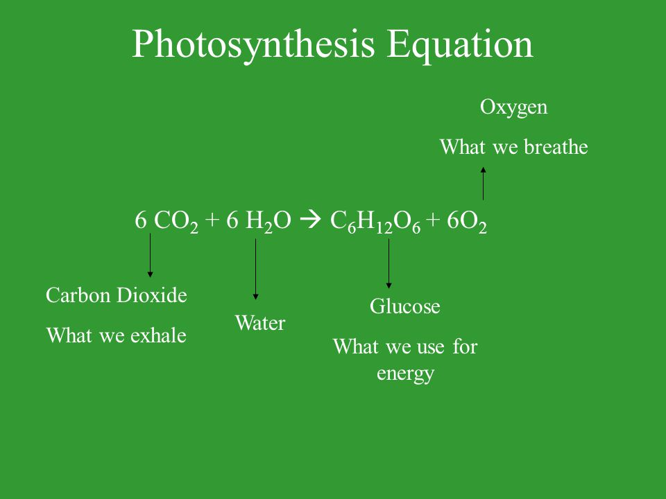 Photosynthesis Equation 6 CO 2 + 6 H 2 O  C 6 H 12 O 6 + 6O 2 Carbon Dioxide What we exhale Water Glucose What we use for energy Oxygen What we breat