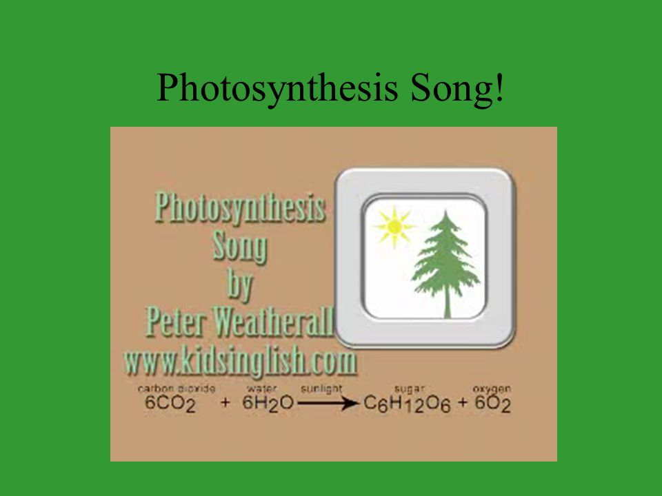 1. Energy is captured from sunlight Photosynthesis