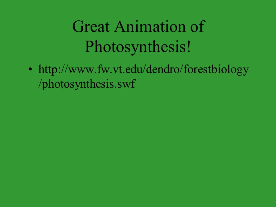 Great Animation of Photosynthesis! http://www.fw.vt.edu/dendro/forestbiology /photosynthesis.swf