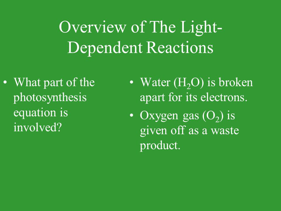 Overview of The Light- Dependent Reactions What part of the photosynthesis equation is involved? Water (H 2 O) is broken apart for its electrons. Oxyg