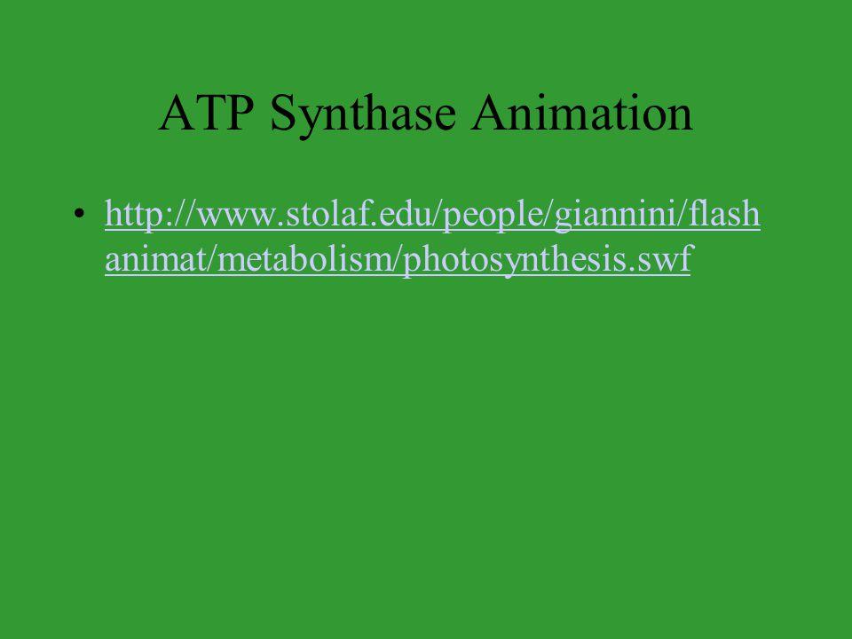 ATP Synthase Animation http://www.stolaf.edu/people/giannini/flash animat/metabolism/photosynthesis.swfhttp://www.stolaf.edu/people/giannini/flash ani