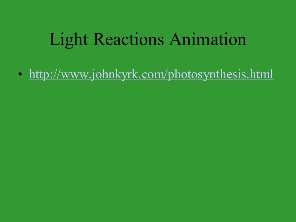 Light Reactions Animation http://www.johnkyrk.com/photosynthesis.html