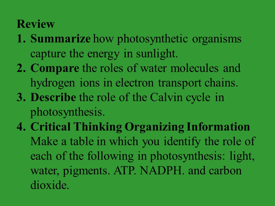 Review 1.Summarize how photosynthetic organisms capture the energy in sunlight. 2.Compare the roles of water molecules and hydrogen ions in electron t