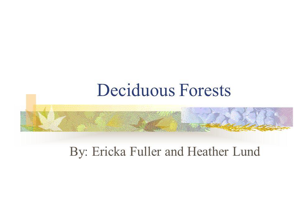 Deciduous Forest Animal Deciduous Forest: Animals