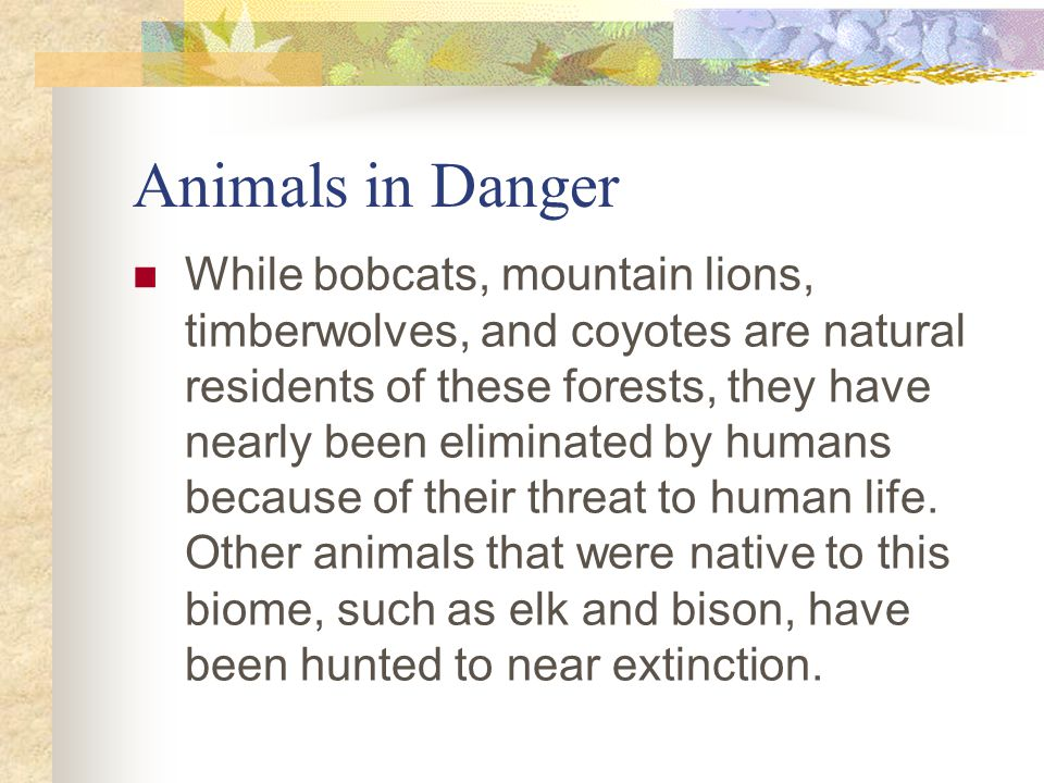 Deciduous Forest Animal Deciduous Forest: Animals