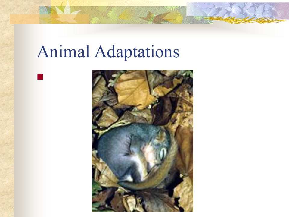 Animal Adaptations Migration and hibernation are two adaptations used by the animals in this biome.