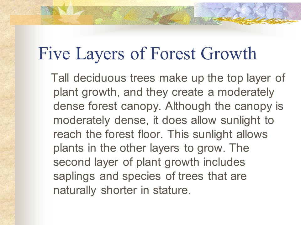 Five Layers of Forest Growth Tall deciduous trees make up the top layer of plant growth, and they create a moderately dense forest canopy.
