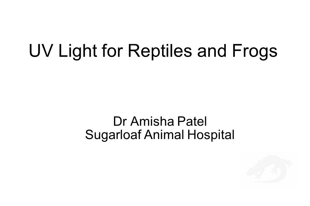 UV Light for Reptiles and Frogs Dr Amisha Patel Sugarloaf Animal Hospital