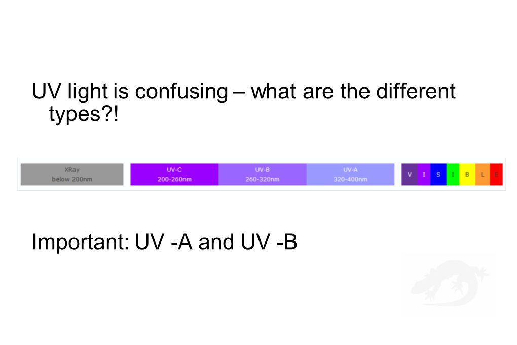 UV light is confusing – what are the different types?! Important: UV -A and UV -B