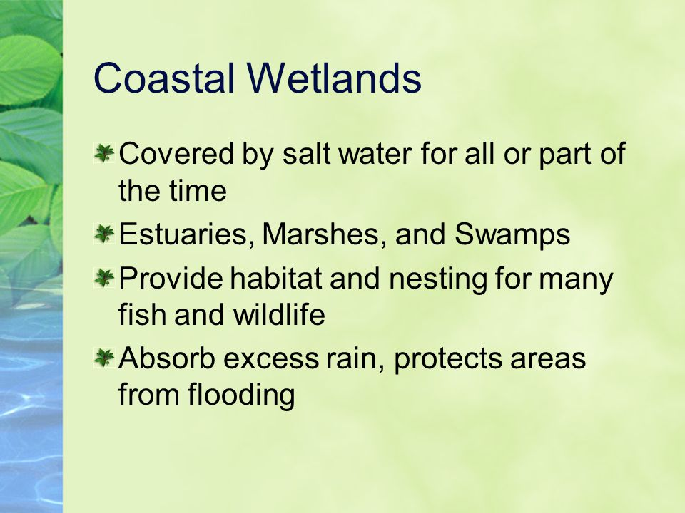 Coastal Wetlands Covered by salt water for all or part of the time Estuaries, Marshes, and Swamps Provide habitat and nesting for many fish and wildli