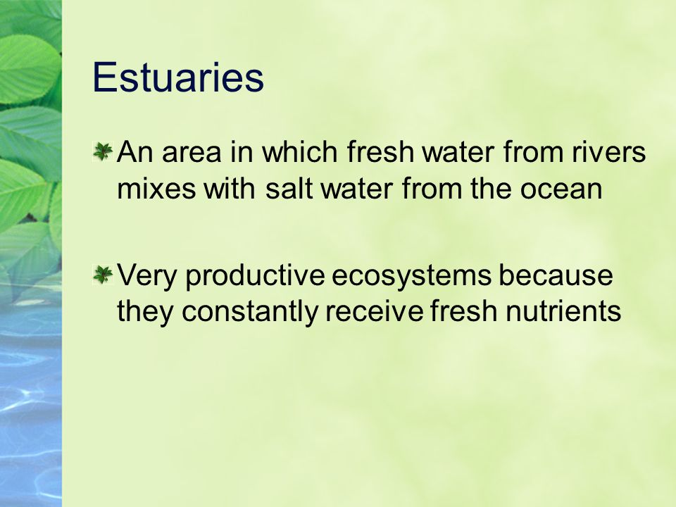 Estuaries An area in which fresh water from rivers mixes with salt water from the ocean Very productive ecosystems because they constantly receive fre