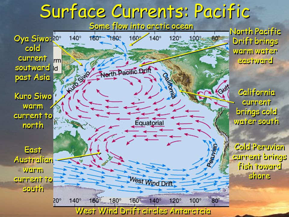 Surface Currents: Pacific Kuro Siwo warm current to north North Pacific Drift brings warm water eastward California current brings cold water south Some flow into arctic ocean Oya Siwo: cold current soutward past Asia East Australian warm current to south West Wind Drift circles Antarctcia Cold Peruvian current brings fish toward shore