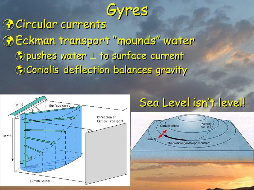 "Gyres Circular currents Eckman transport ""mounds"" water  pushes water  to surface current  Coriolis deflection balances gravity Circular currents E"