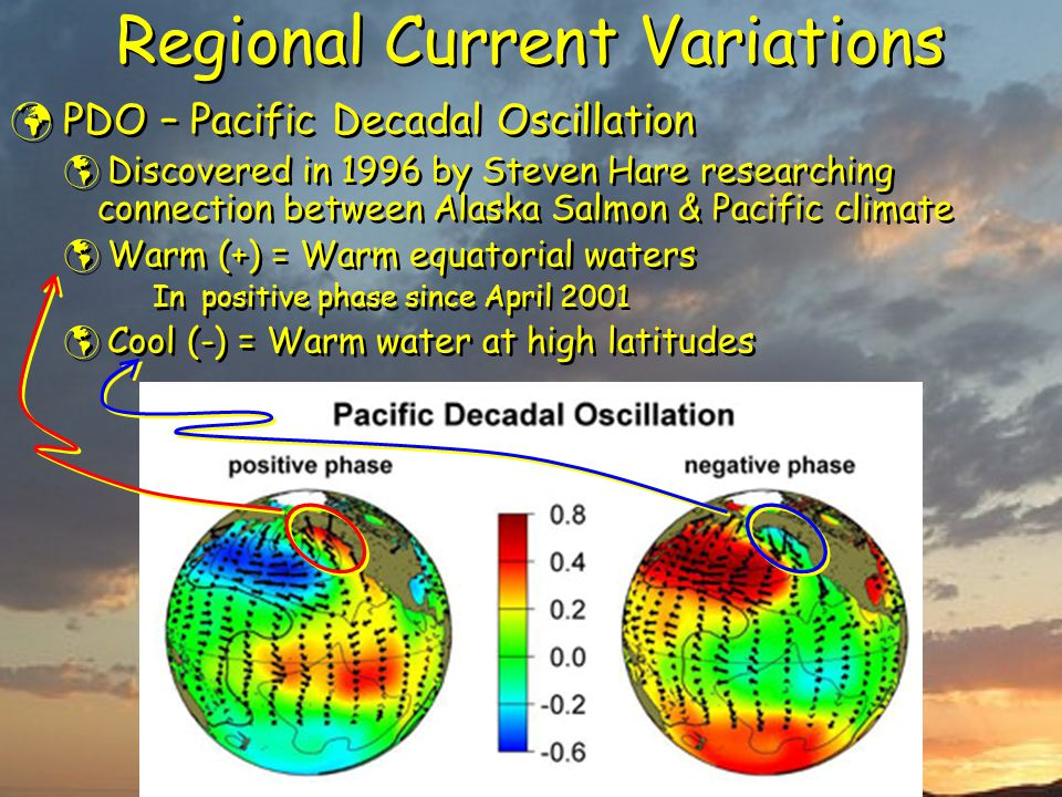 Regional Current Variations PDO – Pacific Decadal Oscillation  Discovered in 1996 by Steven Hare researching connection between Alaska Salmon & Pacific climate  Warm (+) = Warm equatorial waters In positive phase since April 2001  Cool (-) = Warm water at high latitudes PDO – Pacific Decadal Oscillation  Discovered in 1996 by Steven Hare researching connection between Alaska Salmon & Pacific climate  Warm (+) = Warm equatorial waters In positive phase since April 2001  Cool (-) = Warm water at high latitudes
