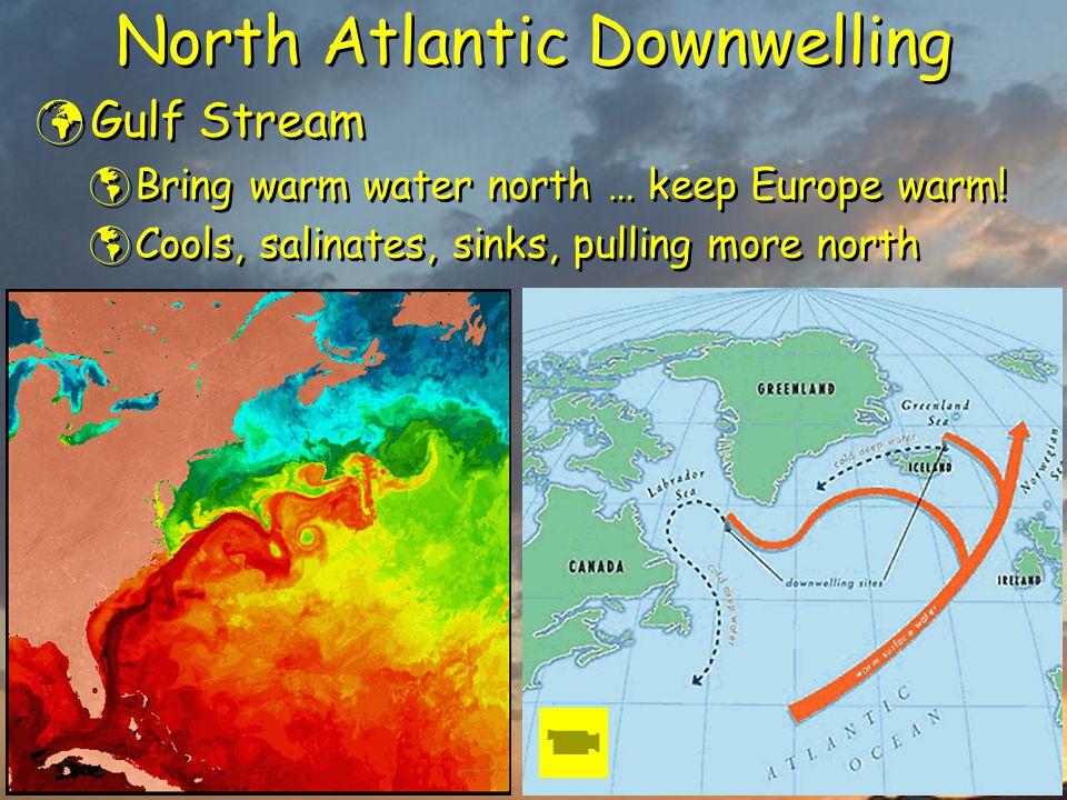 North Atlantic Downwelling Gulf Stream  Bring warm water north … keep Europe warm!  Cools, salinates, sinks, pulling more north Gulf Stream  Bring