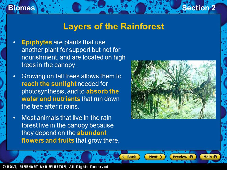BiomesSection 2 Layers of the Rainforest Epiphytes are plants that use another plant for support but not for nourishment, and are located on high tree
