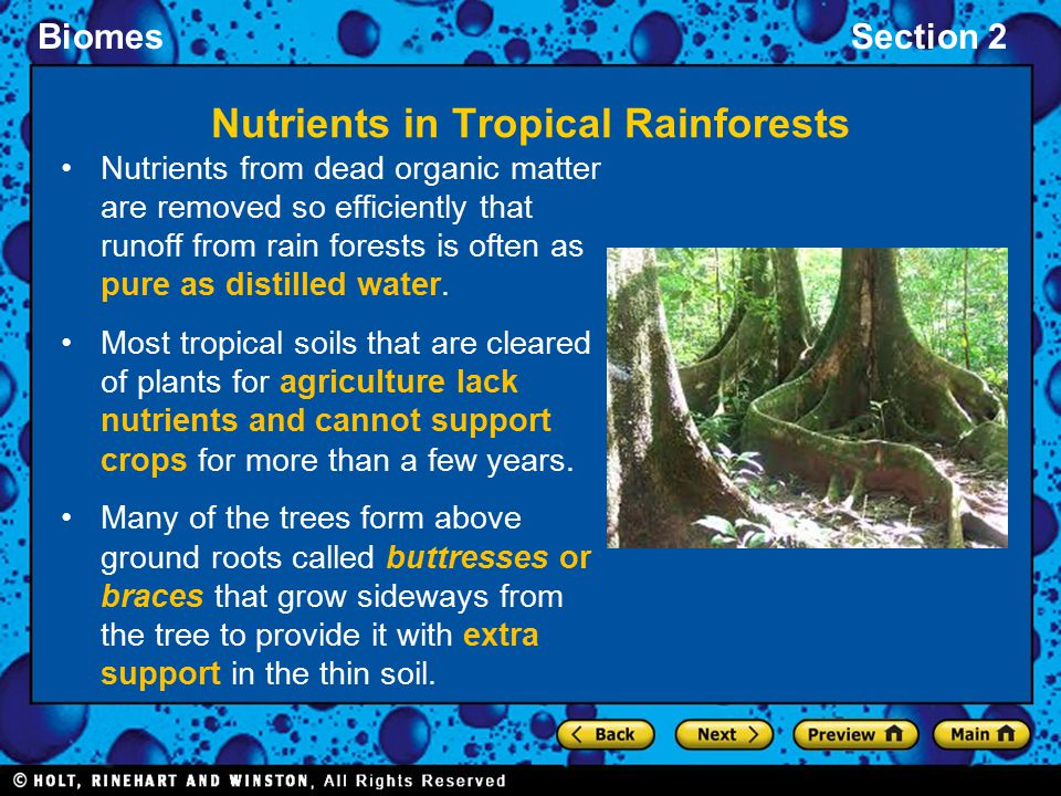 BiomesSection 2 Nutrients from dead organic matter are removed so efficiently that runoff from rain forests is often as pure as distilled water. Most