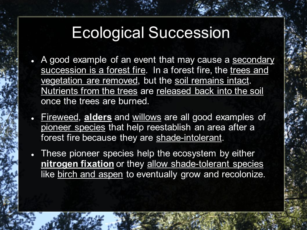 Ecological Succession A good example of an event that may cause a secondary succession is a forest fire. In a forest fire, the trees and vegetation ar