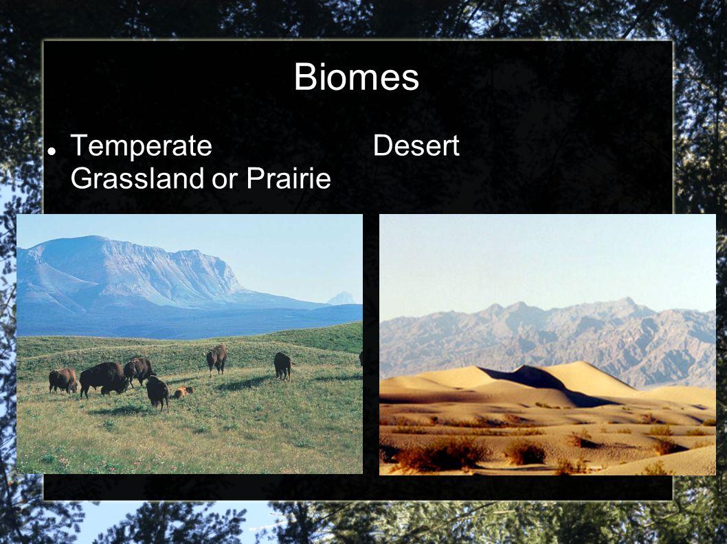 Biomes Temperate Grassland or Prairie Desert