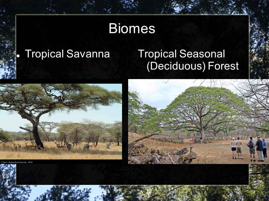 Biomes Tropical SavannaTropical Seasonal (Deciduous) Forest