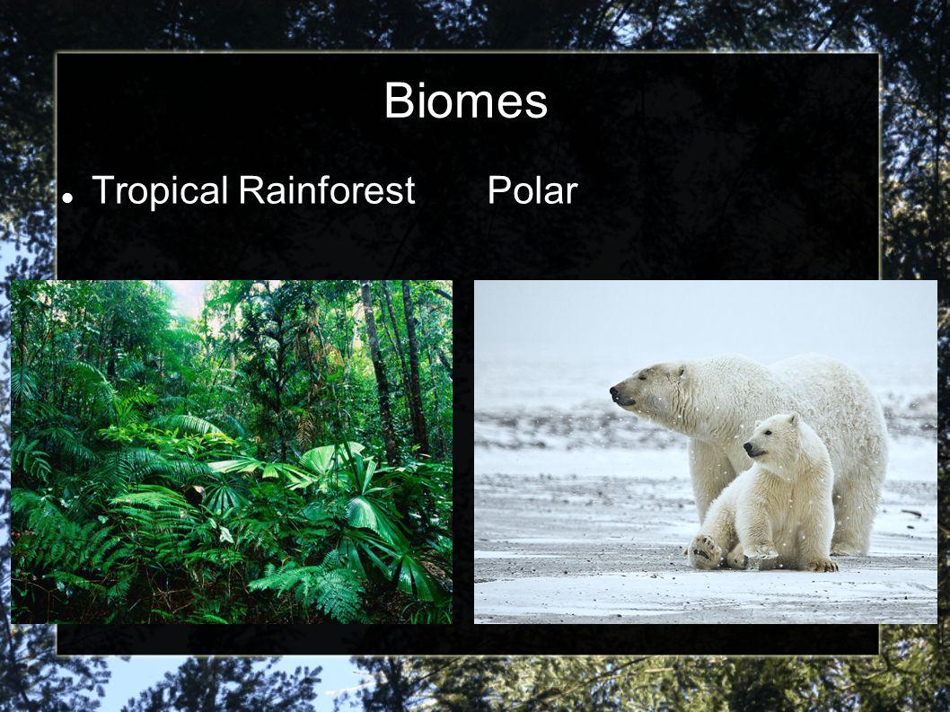 Biomes Tropical RainforestPolar