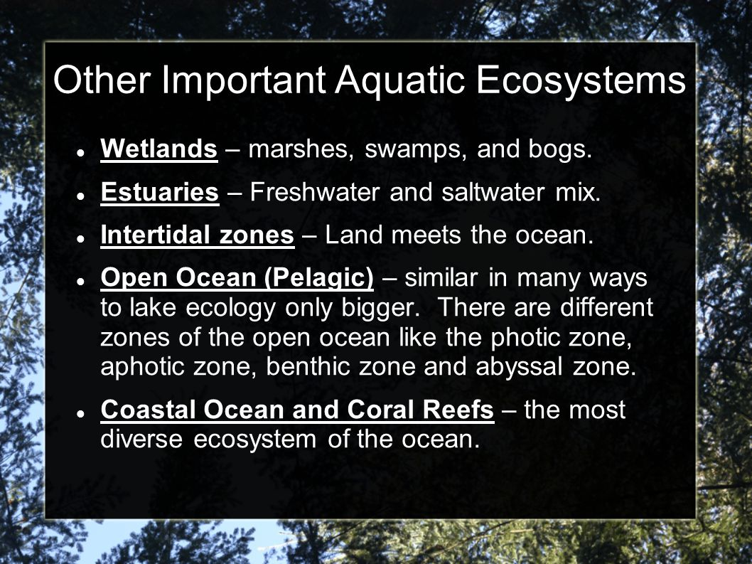Other Important Aquatic Ecosystems Wetlands – marshes, swamps, and bogs. Estuaries – Freshwater and saltwater mix. Intertidal zones – Land meets the o