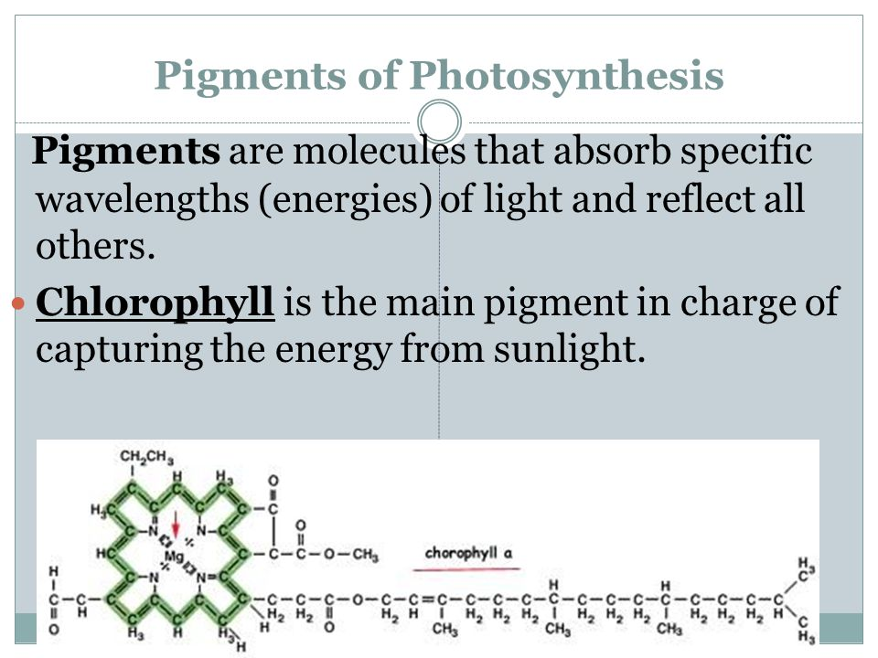 Pigments of Photosynthesis Pigments are molecules that absorb specific wavelengths (energies) of light and reflect all others. Chlorophyll is the main