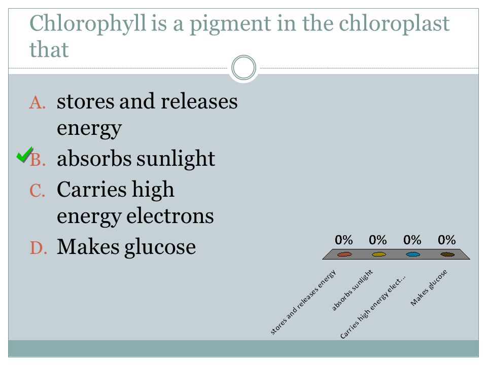 Chlorophyll is a pigment in the chloroplast that A. stores and releases energy B. absorbs sunlight C. Carries high energy electrons D. Makes glucose