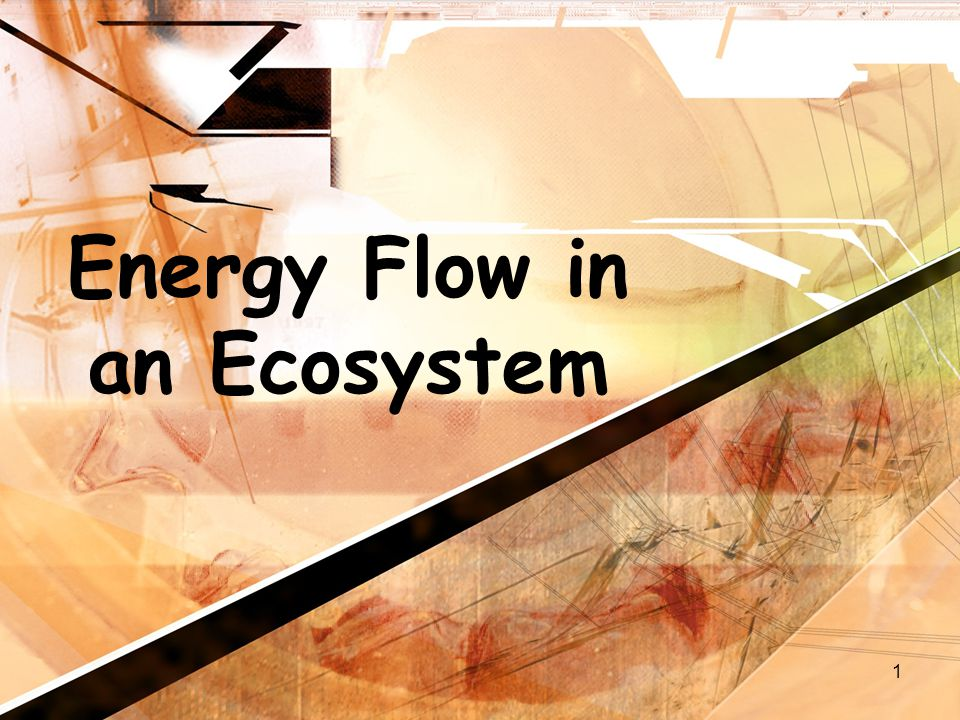 1 Energy Flow in an Ecosystem