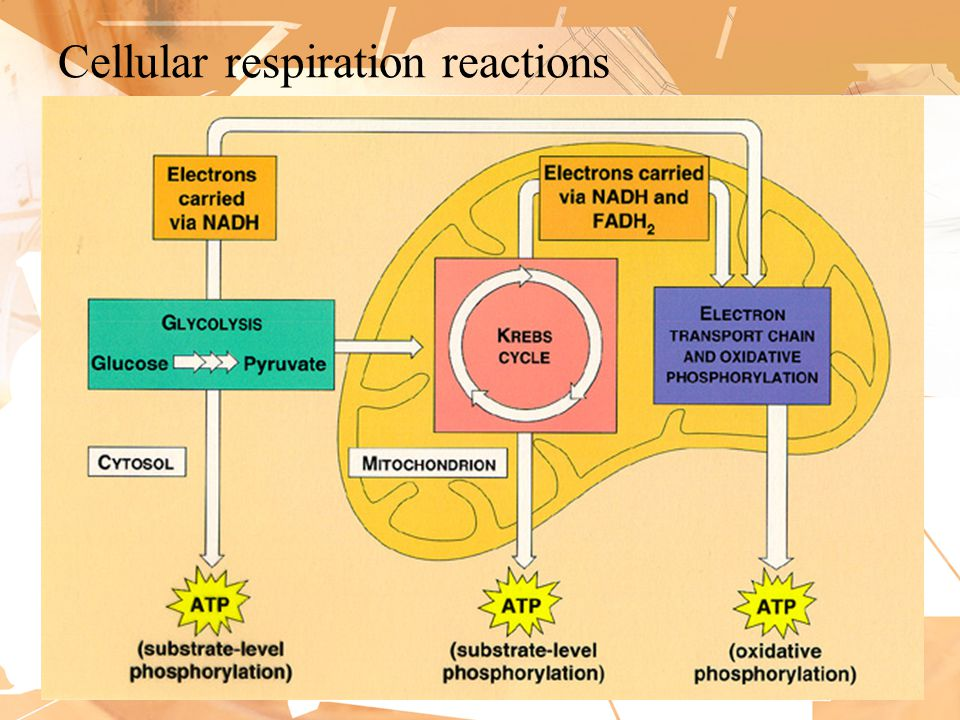 Cellular respiration reactions 10