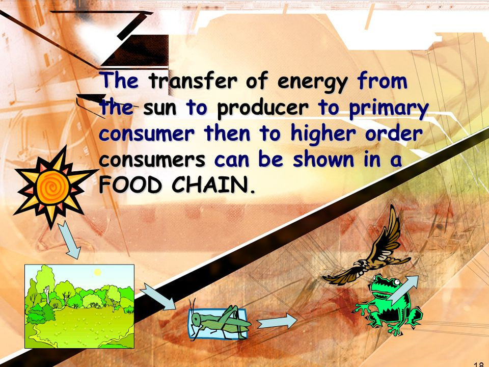 18 The transfer of energy from the sun to producer to primary consumer then to higher order consumers can be shown in a FOOD CHAIN.