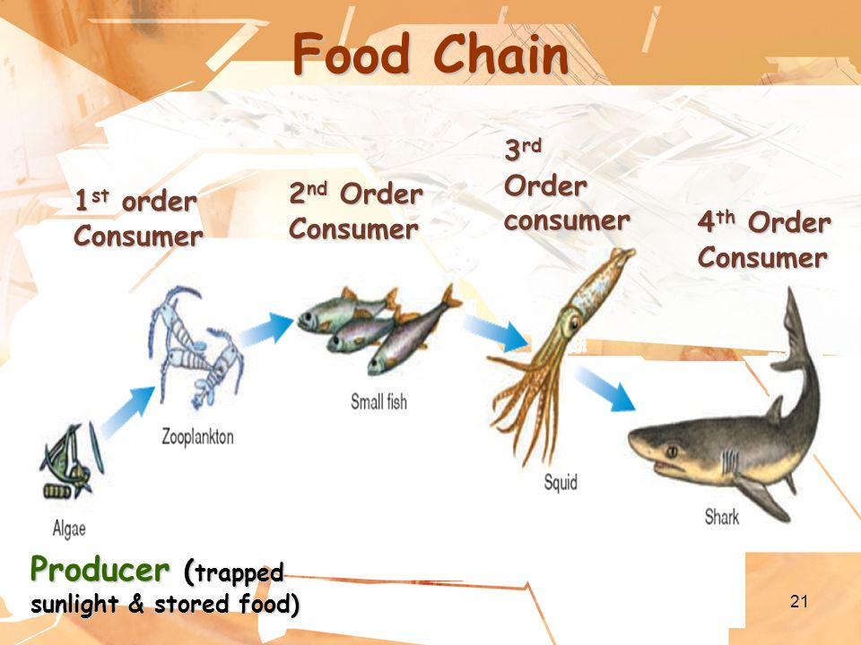 21 Food Chain Producer ( trapped sunlight & stored food) 1 st order Consumer 2 nd Order Consumer 3 rd Order consumer 4 th Order Consumer