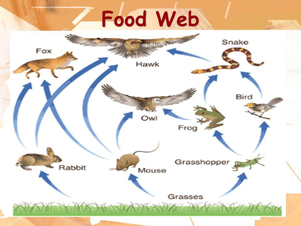 24 Food Web