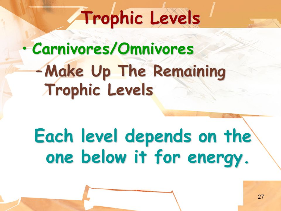 27 Trophic Levels Carnivores/OmnivoresCarnivores/Omnivores –Make Up The Remaining Trophic Levels Each level depends on the one below it for energy.