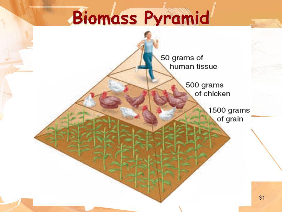 31 Biomass Pyramid