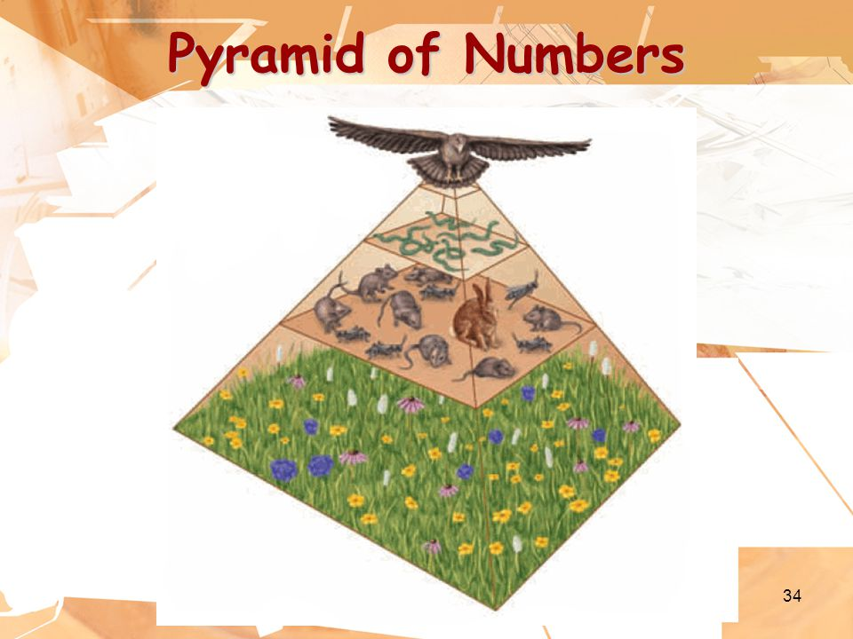 34 Pyramid of Numbers