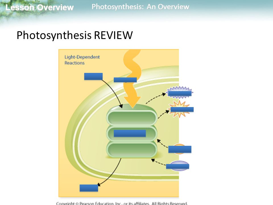 Lesson Overview Lesson Overview Photosynthesis: An Overview Photosynthesis REVIEW