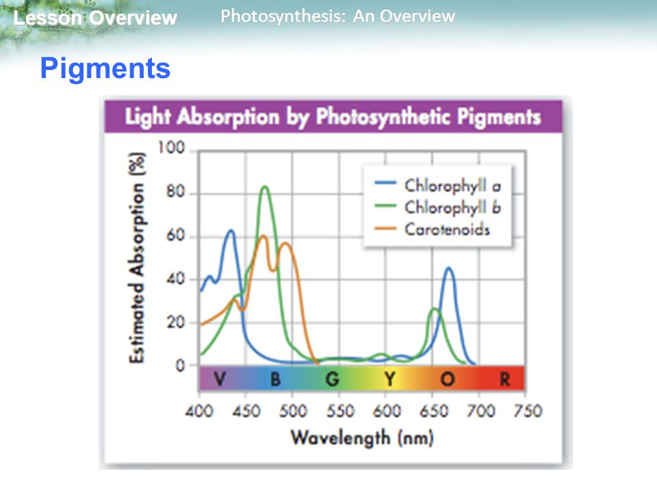 Lesson Overview Lesson Overview Photosynthesis: An Overview Pigments