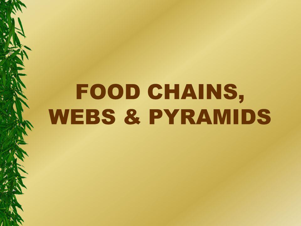 FOOD CHAINS, WEBS & PYRAMIDS
