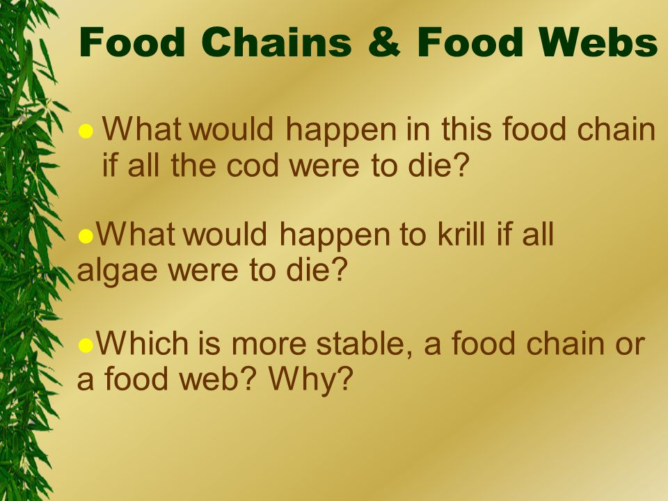 Food Chains & Food Webs l What would happen in this food chain if all the cod were to die.