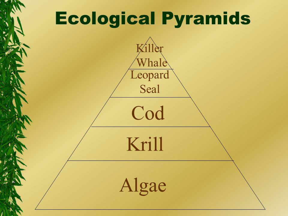 Algae Krill Cod Leopard Seal Killer Whale Ecological Pyramids