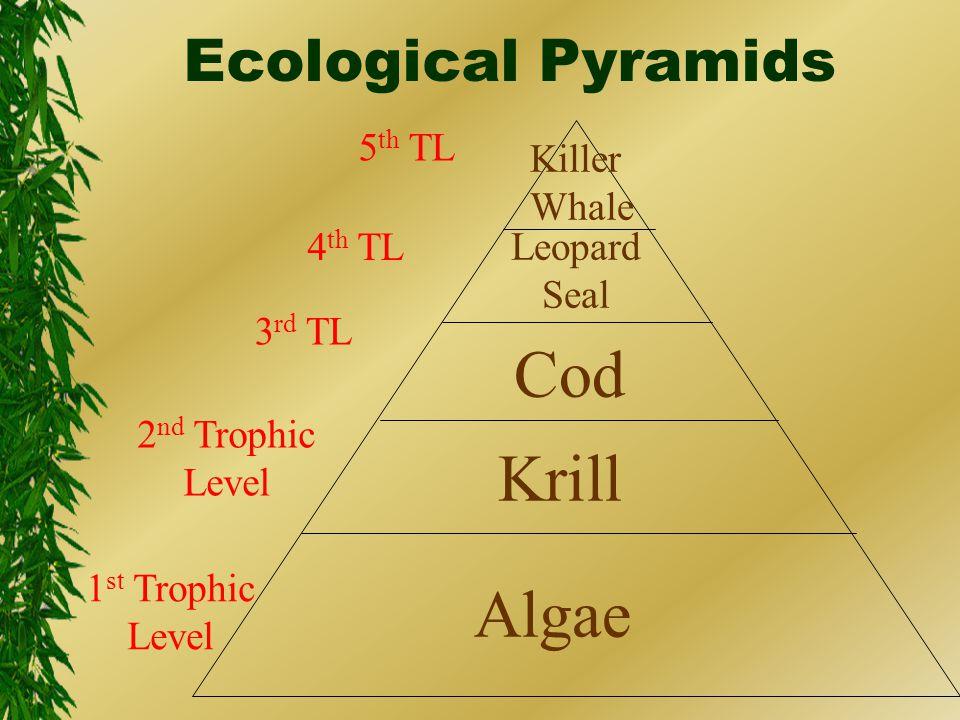 1 st Trophic Level 2 nd Trophic Level 3 rd TL 4 th TL 5 th TL Algae Krill Cod Leopard Seal Killer Whale