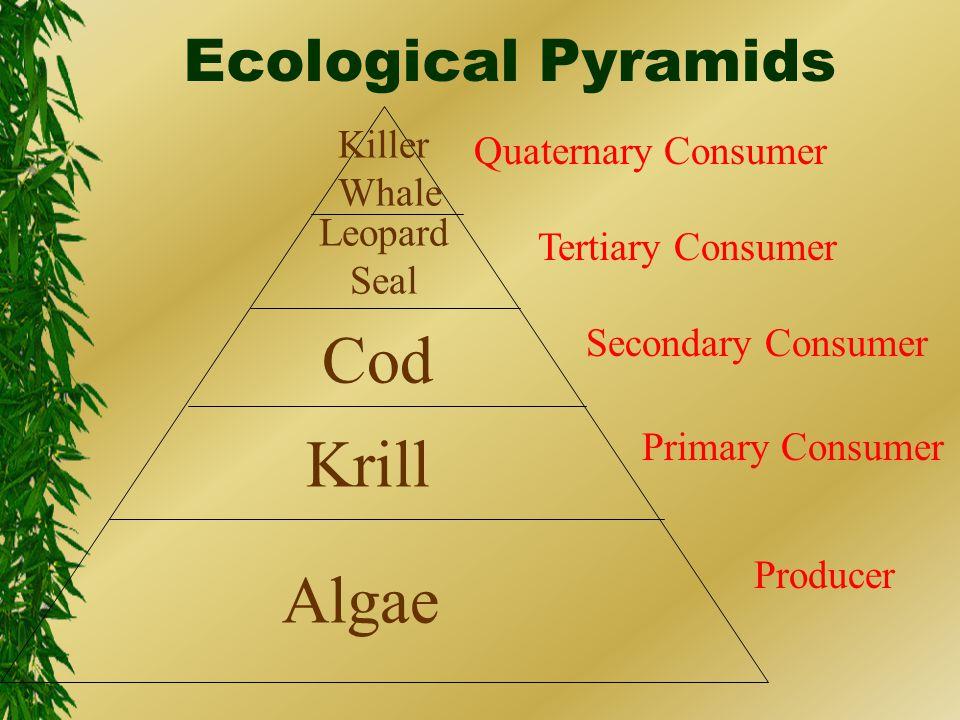 Ecological Pyramids Producer Primary Consumer Secondary Consumer Tertiary Consumer Quaternary Consumer Algae Krill Cod Leopard Seal Killer Whale