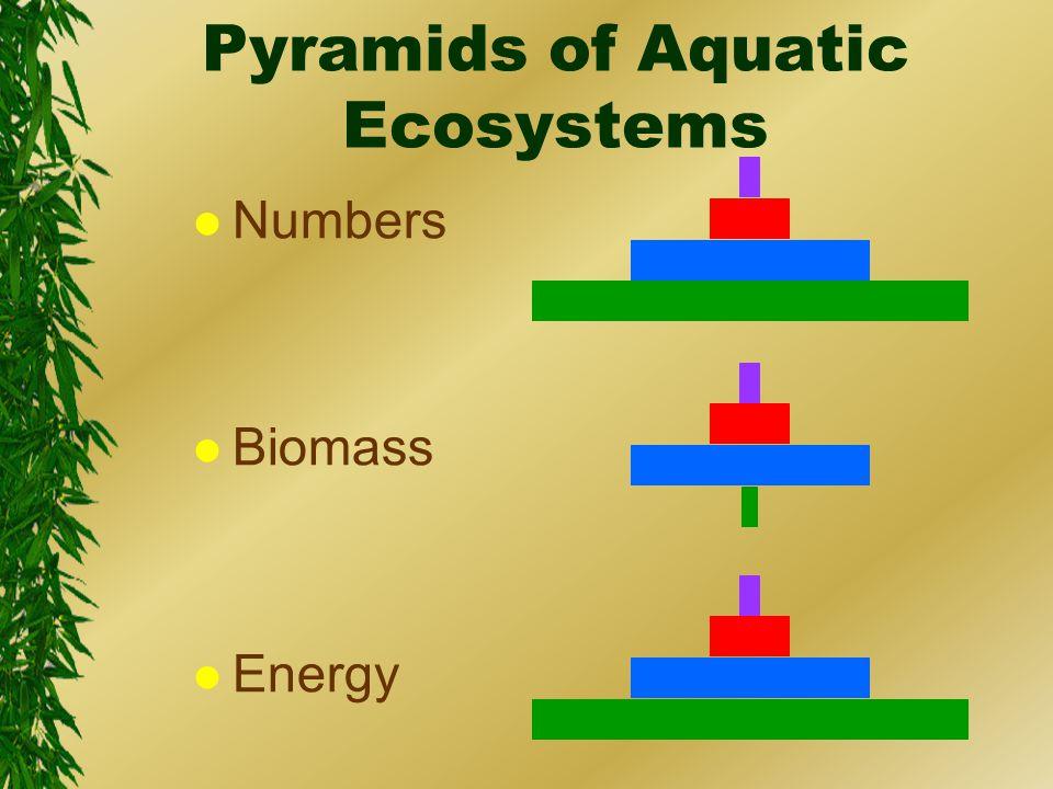 Pyramids of Aquatic Ecosystems l Numbers l Biomass l Energy