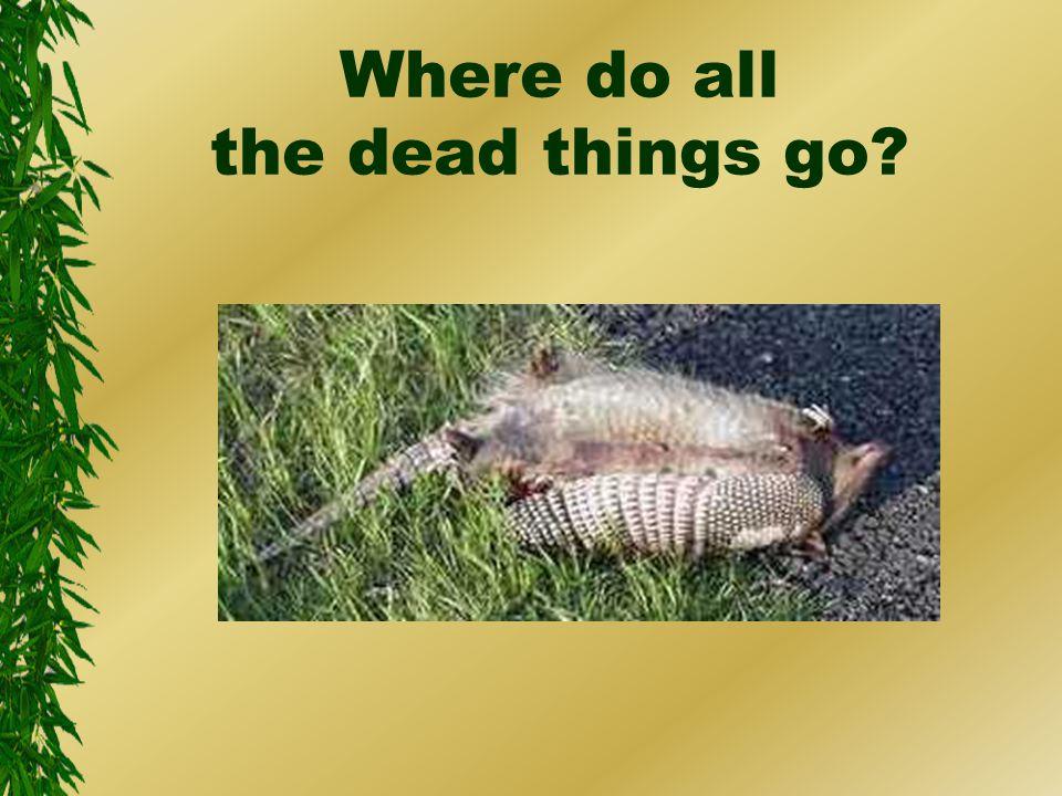 Where do all the dead things go?