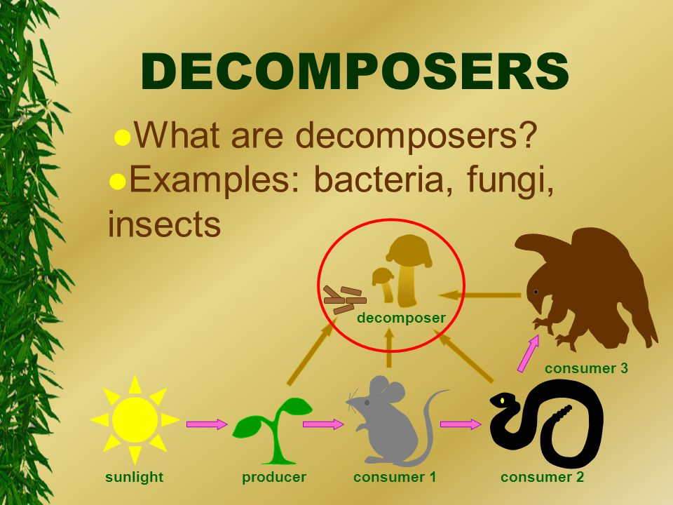 DECOMPOSERS l What are decomposers.