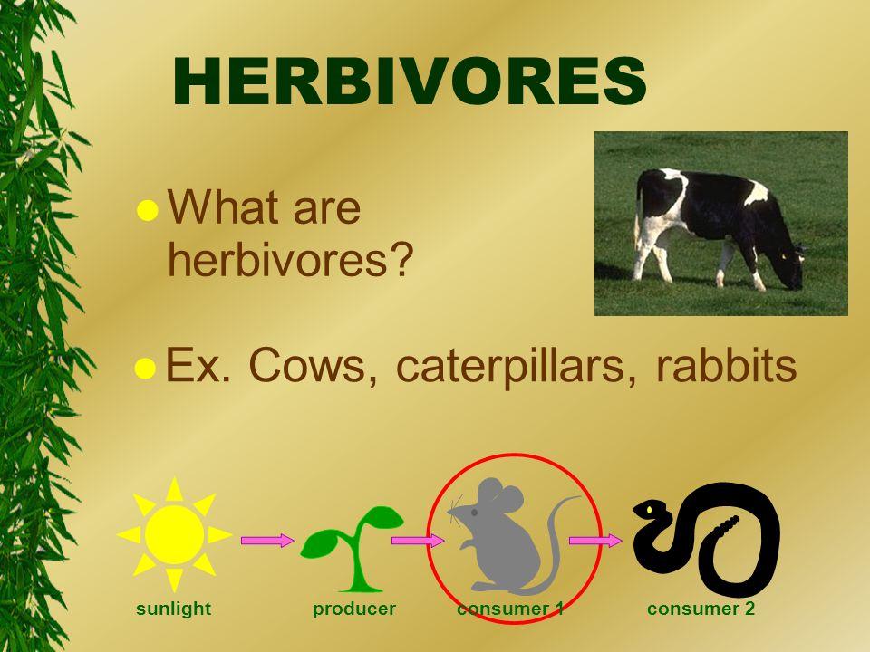 HERBIVORES l What are herbivores. l Ex.
