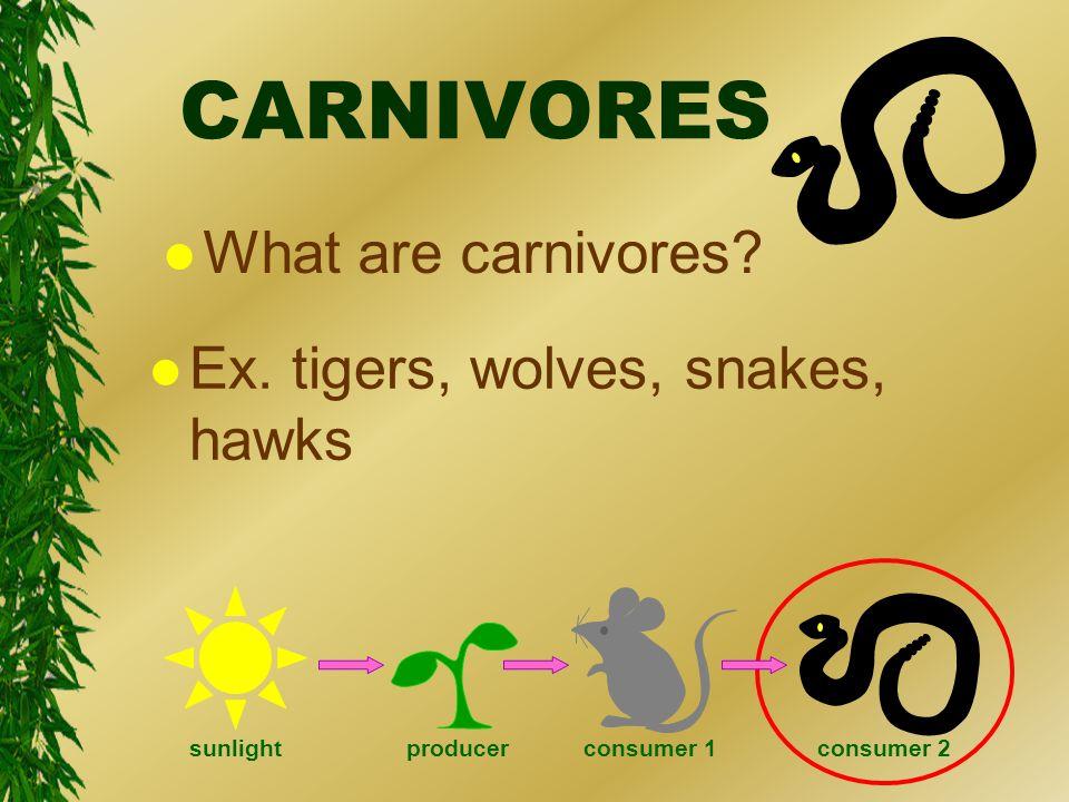 CARNIVORES l What are carnivores. l Ex.