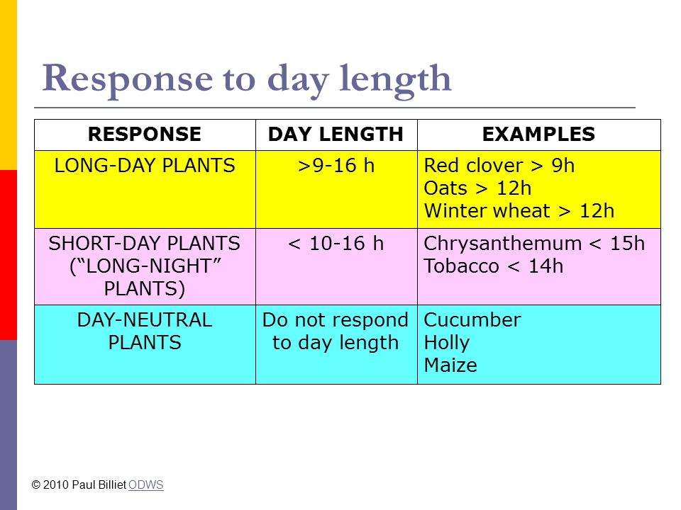 Response to day length Cucumber Holly Maize Do not respond to day length DAY-NEUTRAL PLANTS Chrysanthemum < 15h Tobacco < 14h < 10-16 hSHORT-DAY PLANTS ( LONG-NIGHT PLANTS) Red clover > 9h Oats > 12h Winter wheat > 12h >9-16 hLONG-DAY PLANTS EXAMPLESDAY LENGTHRESPONSE © 2010 Paul Billiet ODWSODWS